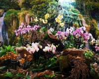 Międzynarodowa Wystawa Orchidei, Bonsai i Sukulentów